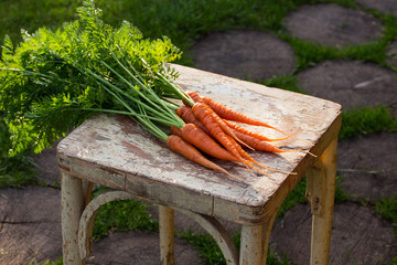 Fresh organic carrots with green leaves on wooden background.
