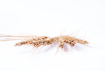 Ears of Rye on a white background