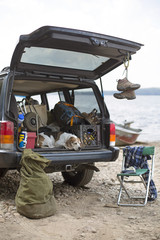 Dog Relaxing On The Boot Of A Car On A Road Trip In The Adirondacks
