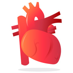 Realistic Organ Heart vector