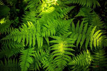 Green fern leaf texture. Leaf texture background