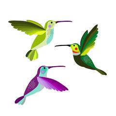 Hummingbird vector illustration bird, colibri birds set.