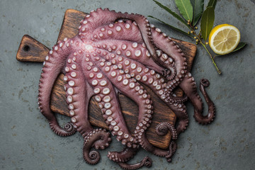 Seafood octopus. Whole fresh raw octopus on wooden board with lemon and laurel, gray slate background, top view