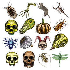 Halloween witchcraft magic set, occult attributes collection, decorative elements for Halloween cards. Human, bird, demon skulls, garlic, skeleton lizard hand, bug, beetle, insect, moth, rat. Vector.