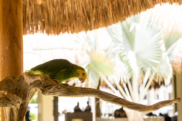 Green Parrot sitting on a branch