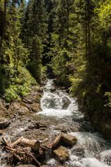 Fluss und Bäume