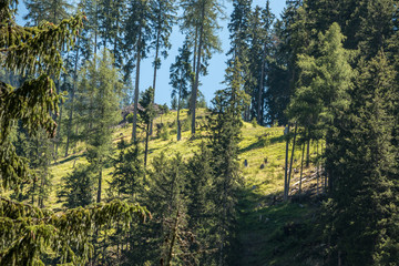 Berg dun Bäume
