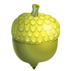 Green acorn isolated on white background close up. Vector Illustration