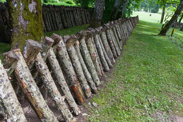 Logs for cultivation of shiitake mushrooms