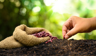 farmer hand planting and sowing seed to soil