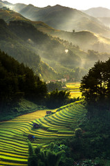 Papiers peints Les champs de riz Top view of Rice terraced fields on Mu Cang Chai District, YenBai province, Northwest Vietnam