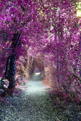 Magical Mystical Purple Woodland Overhanging Pathway