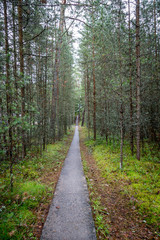 Infinity perspective of walking trail in a pine forest at Gotska sandon national park Sweden.