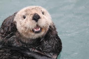 Seeotter im Hafen von Seward, Alaska