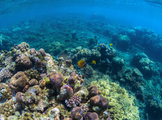 Underwater coral reef perspective landscape. Oceanic biosphere.