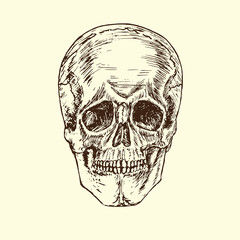 Skull face, hand drawn doodle, sketch in woodcut style, black and white vector illustration