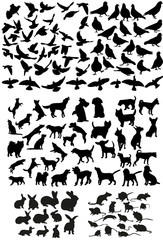 Vector, isolated big set of pets, silhouette of dog and birds, rat, rabbits, collection