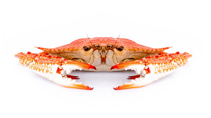 Boiled claw crab Isolated on white background