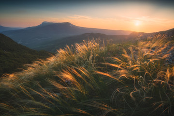 Feather grass on a wind in a mountain valley Wall mural