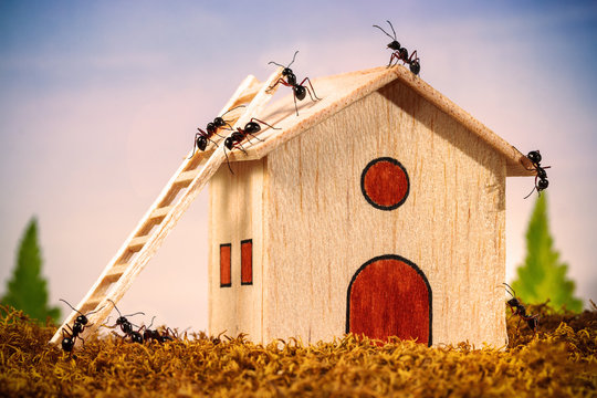 Ants build a house with ladder, teamwork concept