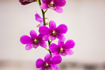 Orchid is a tropical flower queen.