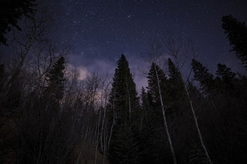 Night Sky Behind Tree Giants