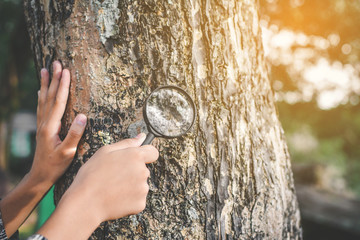 Close up hand holding magnifying glass and big tree color of hipster tone selective soft focus, concept natural explorer