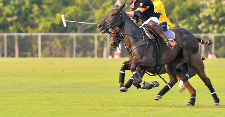 Horse speed in a Polo match.