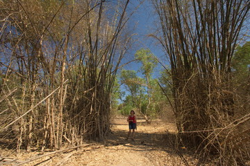 Bamboo Walk im Mary River NP in Australien