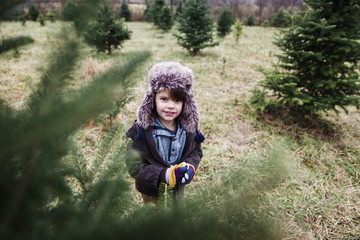 Boy, child looking through the branches of a Christmas tree on a Christmas tree farm.
