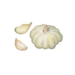 Whole garlic with clove handdrawn illustration. Garlic head watercolor painting on white background.