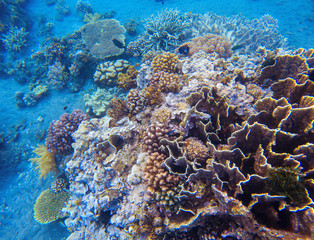 Coral closeup in tropical seashore. Undersea landscape photo. Fauna and flora of tropical shore.