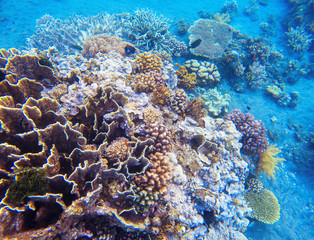 Coral reef underwater photo. Snorkeling in tropics. Exotic island seaside vacation.