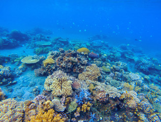 Coral panorama in tropical seashore. Undersea landscape photo
