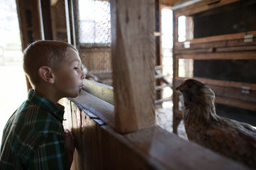 Side view of boy looking at chicken while standing in animal pen