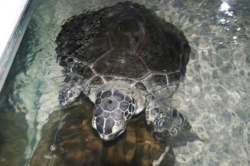 морская черепаха в зоопарке
