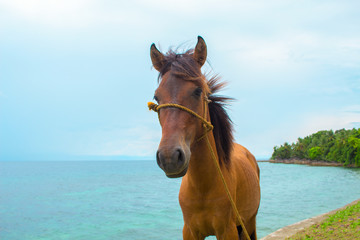 Horse and sea landscape. Travel photo. Brown horse head closeup.