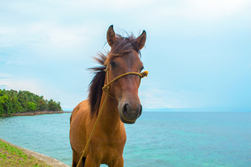 Horse and sea landscape. Travel photo. Brown horse head closeup. Lovely farm animal.