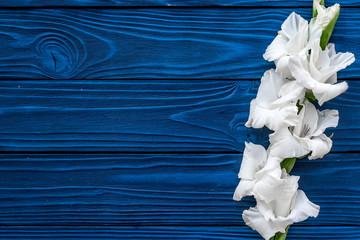 Gladiolus flower on blue wooden background top view copyspace