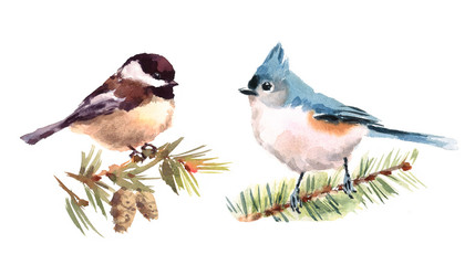 Titmouse and Chickadee Two Birds Watercolor Hand Painted Illustration Set isolated on white background
