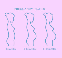 Pregnancy stages, trimester, pregnant woman  on pink background