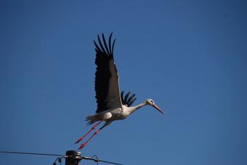 Storch - fliegt los