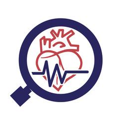 vascullar heart