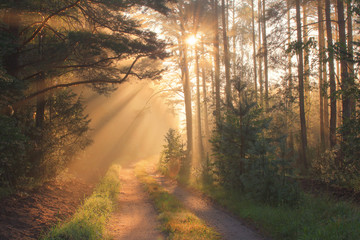 Papiers peints Forets Sun rays in forest