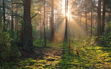 Sunny forest nature