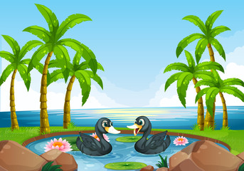 Two black ducks in pond