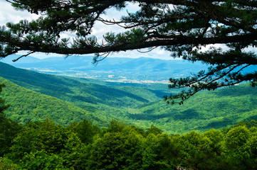 Canvas Prints Hill View from Shenandoah Parkway under a Pine