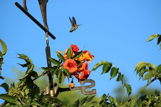 Humingbird and weather vane