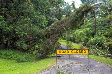 Fallen tree on power lines and road closed sign