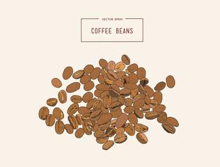 Coffee beans. Hand pencil sketch vector.
